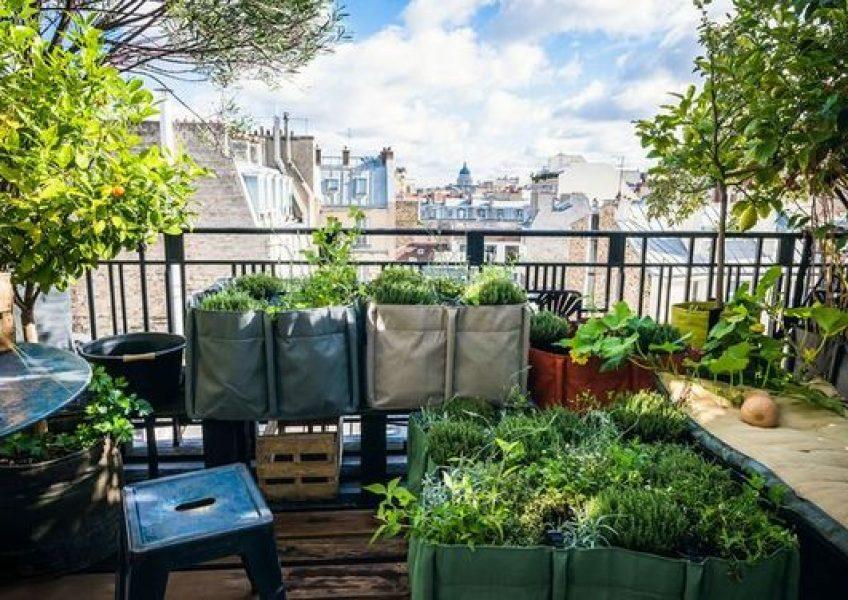 jardin potager balcon