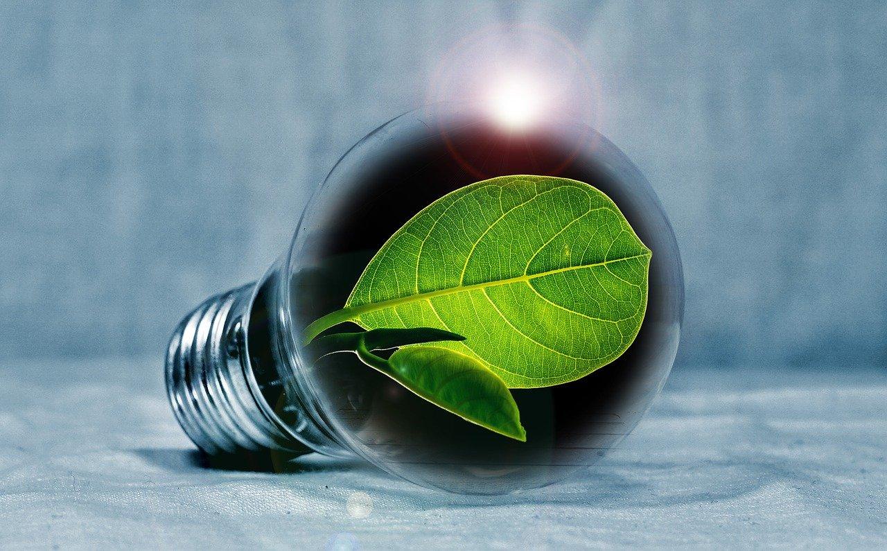 ampoule feuille verte économies
