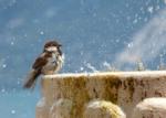 fontaine oiseaux jardin