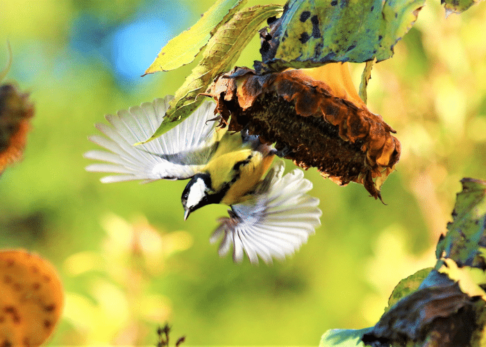 plante naturel oiseau